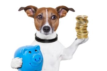 Hund mit Sparschwein und Münzen