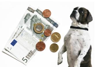 Hund mit Geld